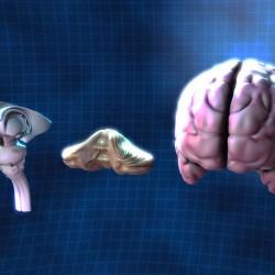 brain 3d