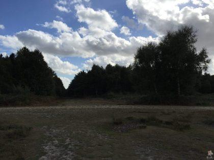 pp-rendlesham-forest-11