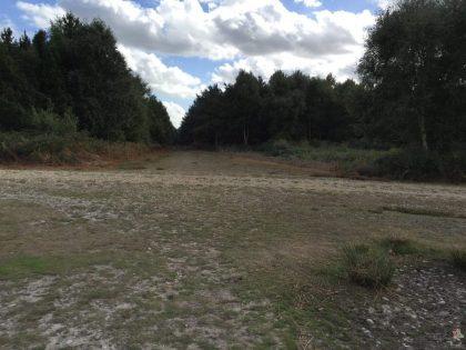 pp-rendlesham-forest-14