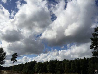 pp-rendlesham-forest-19