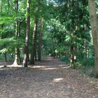 pp-rendlesham-forest-21