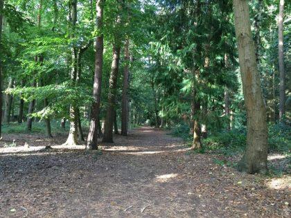 pp-rendlesham-forest-21
