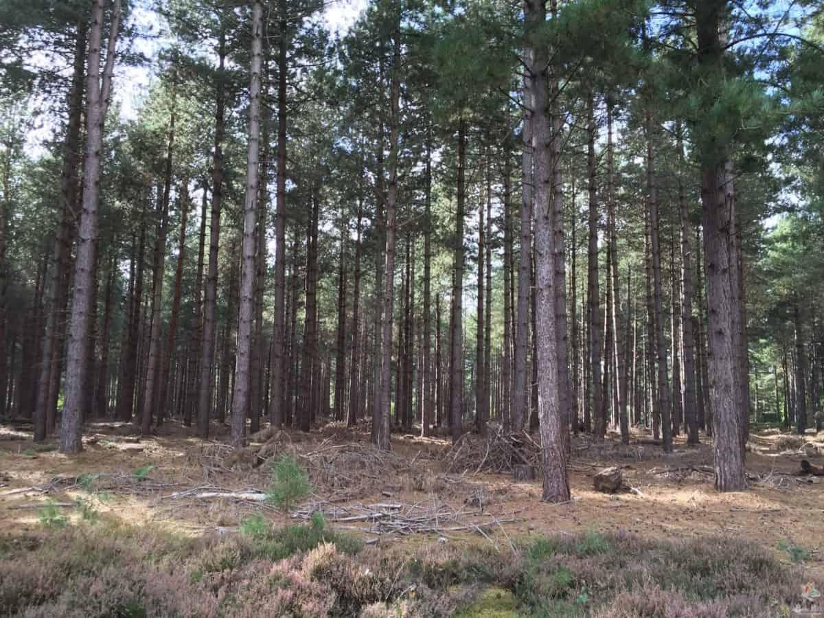 Free Photo Of Rendlesham Forest In Suffolk Taken By