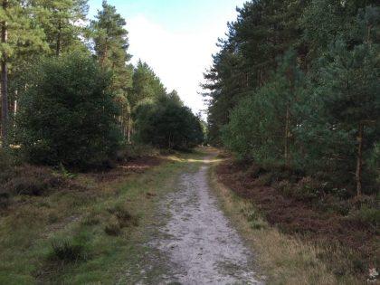 pp-rendlesham-forest-9