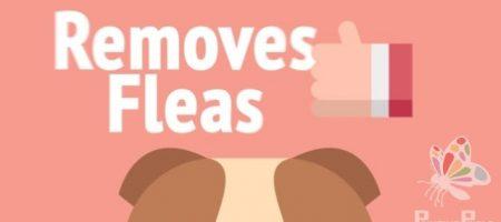 2D Animation Advert for Digital Marketing